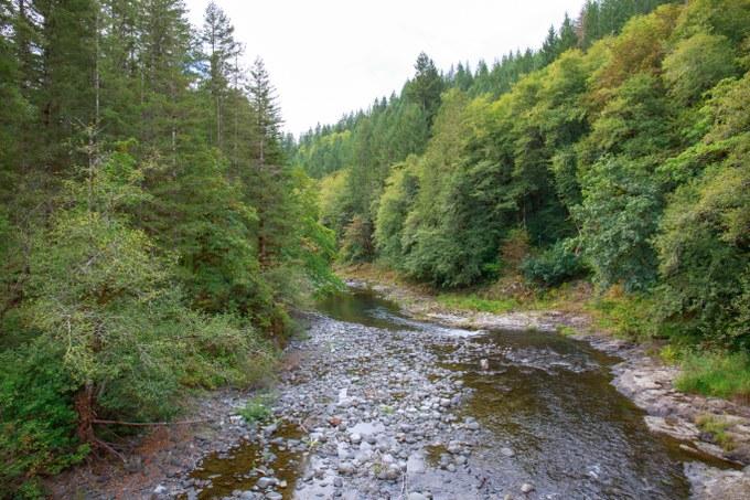 Abbildung 2: Tillamook State Forest.