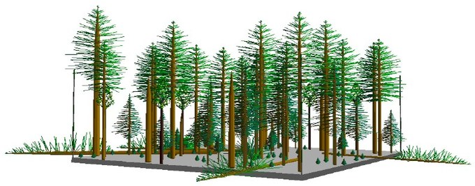 Abbildung 8: Stand Type 4 - Stufenstruktur (Ziel: 20-30%). Quelle: Northwest Oregon State Forests Management Plan 2010