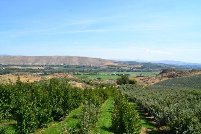 Abbildung 11: Der Blick über die Obstplantage der McIlrath Farm. Foto: Trampe 2016