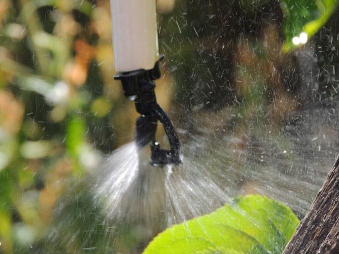 Abbildung 15: Microsprinkler zur Bewässerung der Obstplantage. Foto: Trampe 2016