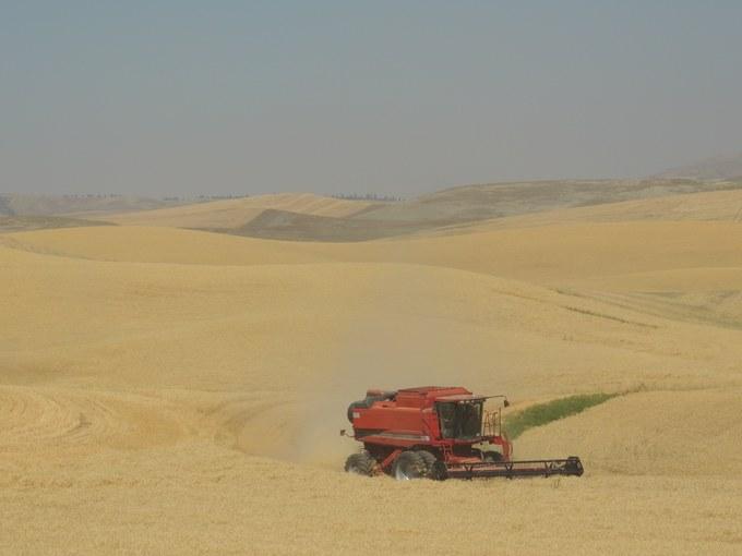 Abbildung 7: Weizenernte in der Palouse Region. Quelle: Trampe 2016