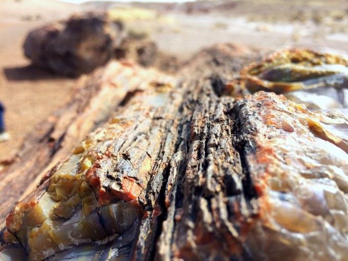Abbildung 4: Versteinerter Baumstamm im Petrified Forest Nationalpark. Zu erkennen sind Versteinerungen unterhalb der Borke, sowie Borkenreste in der Mitte des Bildes. (Foto: L. Stjern 2018)