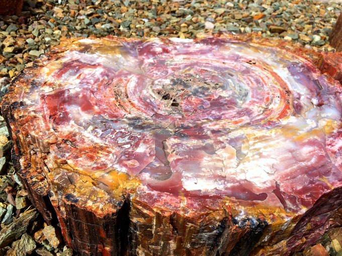 Abbildung 5: Versteinerter Baumstamm im Mosaik-Muster im Petrified Forest Nationalpark. (Foto: Stjern 2018)