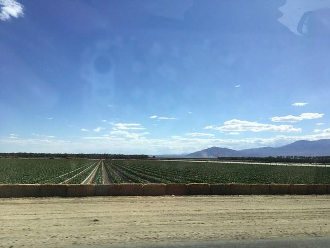 Abbildung 12: Landwirtschaft in Kalifornien. Quelle: Okun 2018