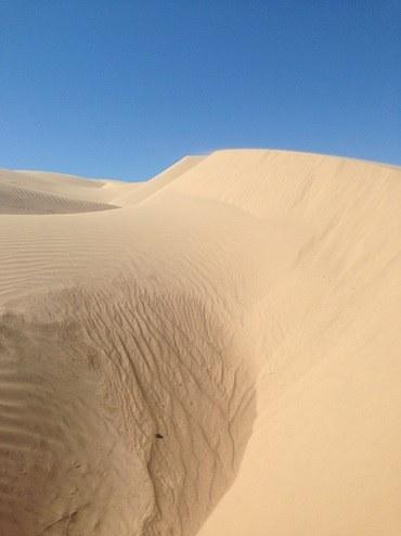 Abbildung 2: Algodones Dunes. Quelle: Mumm 2018