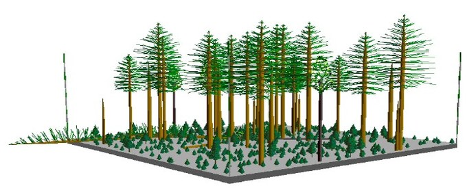 Abbildung 7: Stand Type 3 - Unterwuchs (Ziel: 15-35%). Quelle: Northwest Oregon State Forests Management Plan 2010