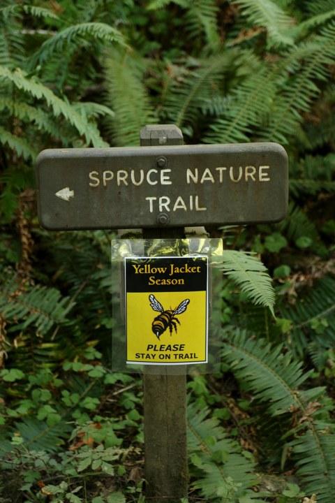 Abbildung 14: Pfadkennzeichnung Richtung Spruce Nature Trail. Foto: Hillringhaus 2016
