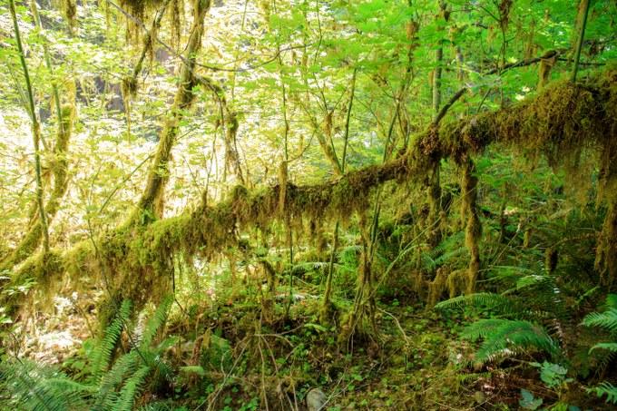 Abbildung 17: Kleiner, umgefallener Baum bietet neuen Lebensraum. Foto: Busche 2016