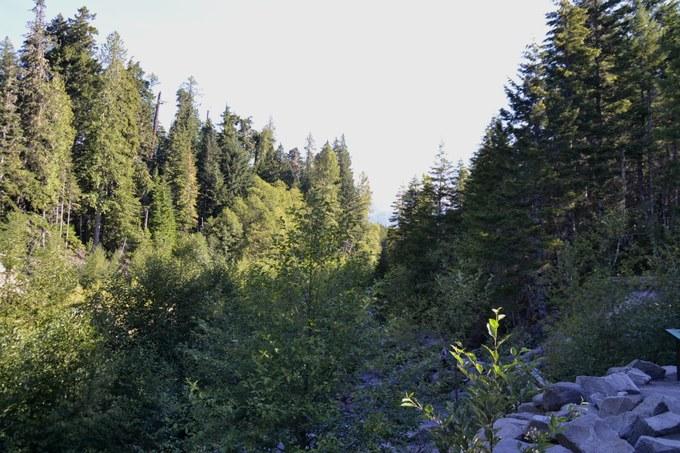 Abbildung 5: Koniferen- und Auenwälder der unteren montanen Stufe am Kautz Creek Trail. Foto: Schnaedelbach 2016.