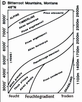 Abbildung 6: Schema der Höhenzonierung in den Kordilleren der USA. Quelle: Peet 2000 (übersetzt).