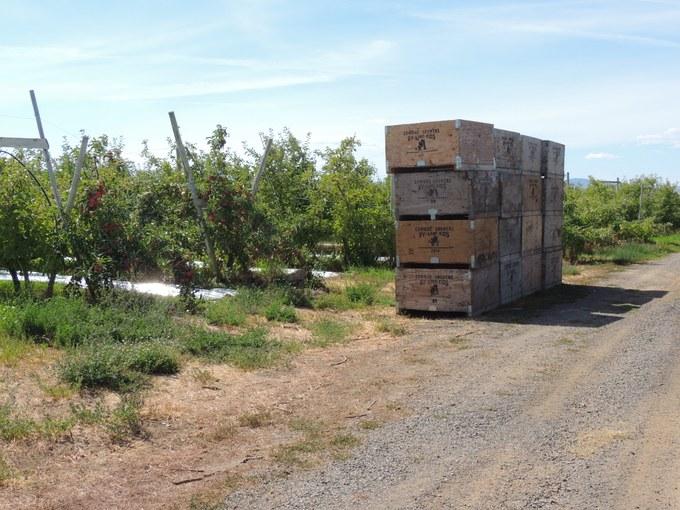 Abbildung 13: Obstkisten der McIlrath Farm für den Transport der Waren. Foto: Trampe 2016
