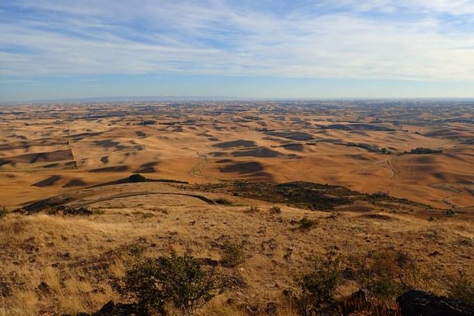 Abbildung 9: Blick vom Steptoe Butte auf die Palouse Region. Quelle: Trampe 2016