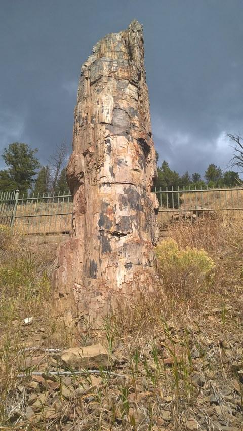 Abbildung 12: Versteinerter Baumstamm nahe Tower-Roosevelt. Quelle: Hellberg 2016