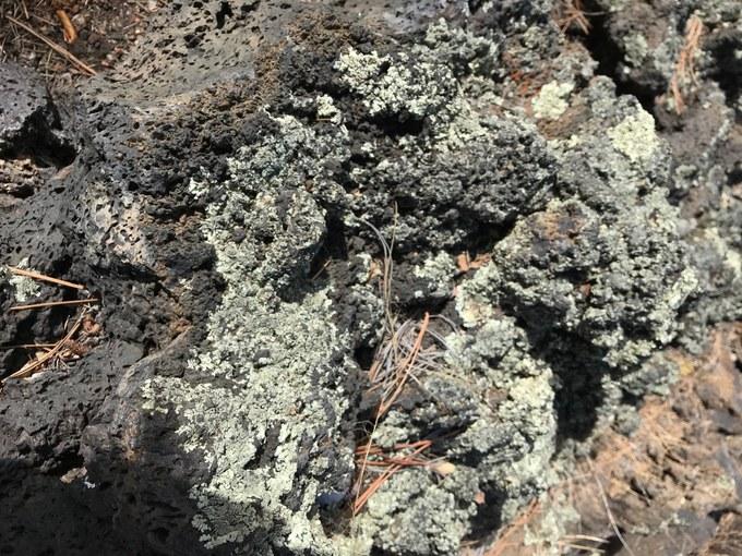 Abbildung 8: Flechte auf Basaltgestein (WOLTERS 2018).