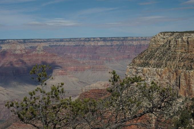 Abbildung 10: Die Vegetation des Grand Canyon National Parks – Im Hintergrund: Hänge mit spärlich werdender Vegetation – Im Vordergrund: die Krone einer Pinyon-kiefer. Quelle: Groth 2018.