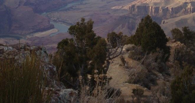 Abbildung 12: Utah-Wacholderbüsche vor dem Panorama des Colorado-Rivers am Navajo-Point. Quelle: Walther 2018.