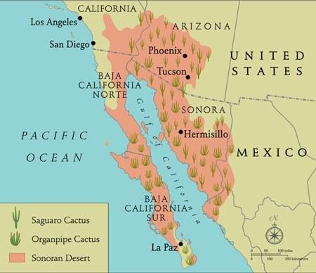 Abbildung 2: Verbreitungsgebiet der Saguaros sowie Orgelpfeifen-Kakteen in der Sonora Desert. Quelle: Mirocha, P. (2011)