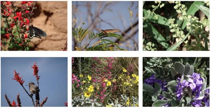 """Abbildung 7: Impressionen aus dem """"pollination garden"""". Quelle: Böhnert und Günther 2018"""