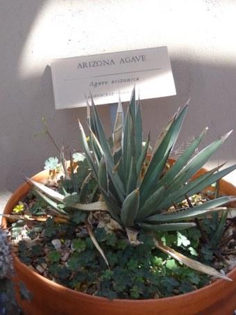 """Abbildung 8: Impressionen aus dem """"cactus garden"""" und dem """"agave garden"""". Quelle: Böhnert und Günther 2018"""