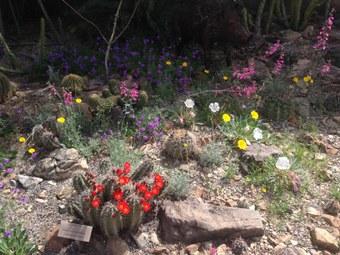 Arizona-Sonora Desert Museum (2006): URL: https://www.desertmuseum.org/desert/sonora.php (Stand 25.05.2018). Grinstead, K. (2016): Arizona sonora desert museum entrance. URL: http://www.gonewiththegrins.com/wp-content/uploads/2016/01/Arizona-sonora-desert-museum-entrance.jpg (Stand 25.05.2018). Johnson, J. A. (2010): A cotton field outside Phoenix, near Goodyear, AZ. URL: https://commons.wikimedia.org/wiki/File:CottonField.PhoenixAZ.140320.jpg (Stand 25.05.2018). Mirocha, P. (2011): URL: http://paulmirocha.com/projects/desert-botanical-garden-trail-signs/sd_map/#.WvlHMoiFPIU (Stand 25.05.2018).