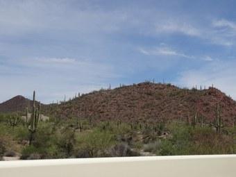 Abbildung 9: Alter Saguaro und Blick vom Red Hill Visitor Center. Quelle: Böhnert und Günther 2018